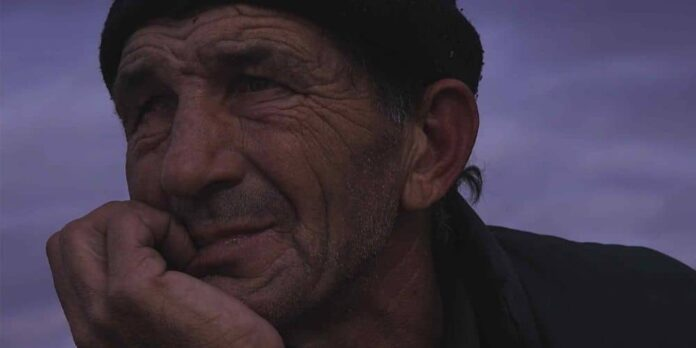 Looking for Horses, en film av Stefan Pavlović