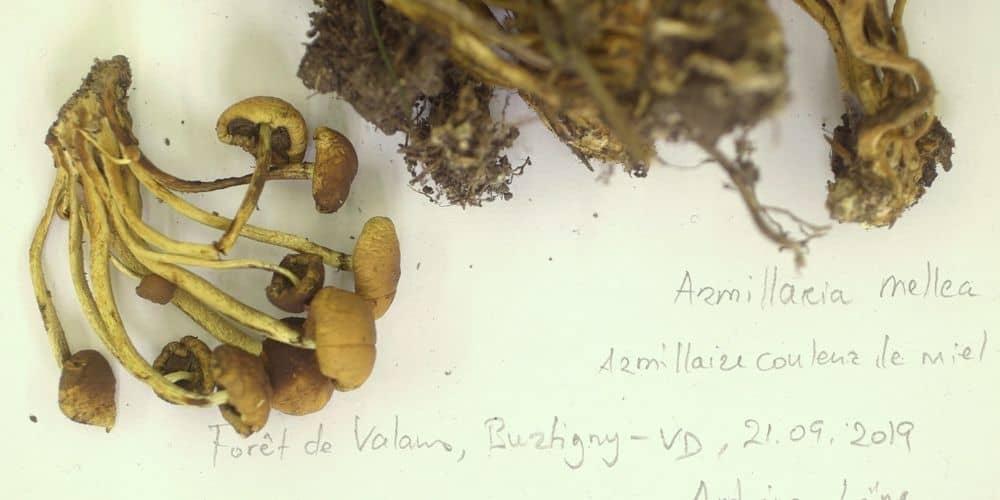 蘑菇会说话,马里昂·诺依曼的电影